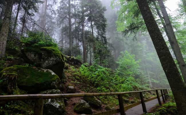 The Black Forest, German... is listed (or ranked) 2 on the list 12 Super Haunted Forests You Never Want To Get Lost In