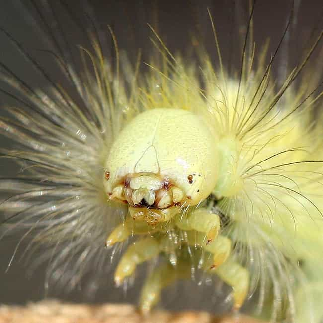 Caterpillars Get Comfortable i... is listed (or ranked) 3 on the list 12 Common Bugs You've Probably Eaten Without Even Knowing It