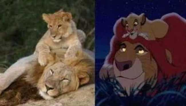 The Real Lion King is listed (or ranked) 8 on the list 21 Famous Movie Scenes Hilariously Recreated in Real Life