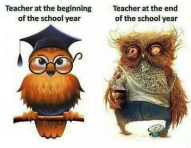 """Hoot and Holla! is listed (or ranked) 2 on the list The Funniest """"Before and After"""" Memes Ever"""