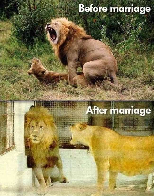 """The Lion Queen is listed (or ranked) 4 on the list The Funniest """"Before and After"""" Memes Ever"""