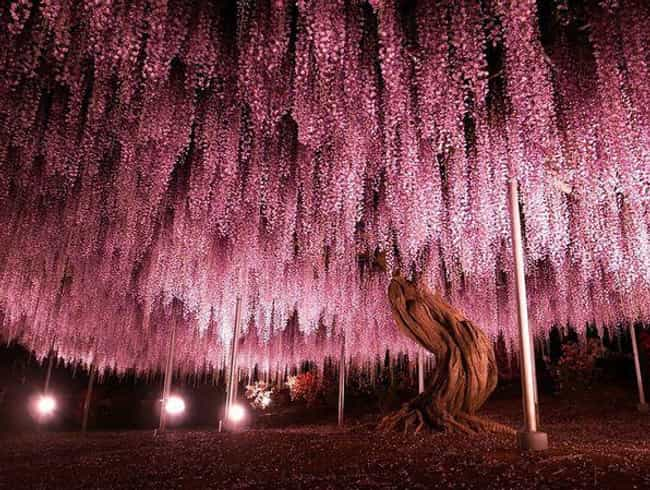 Spectacular 144-Year-Old... is listed (or ranked) 1 on the list 28 Incredibly Unique Trees from Around the World