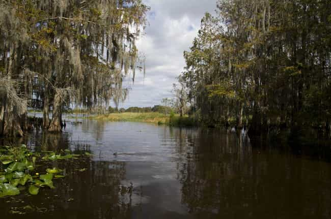 The Boggy Creek Monster Reache... is listed (or ranked) 4 on the list 12 Ghostly Stories and Mysterious Urban Legends from Arkansas