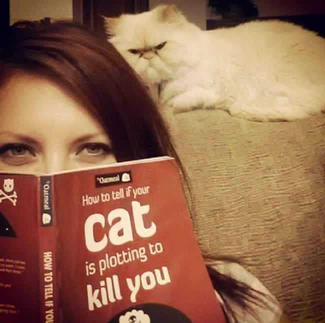 The Truth About Cats, Not Dogs is listed (or ranked) 1 on the list 20 Photos That Prove Cats Are Pure Evil