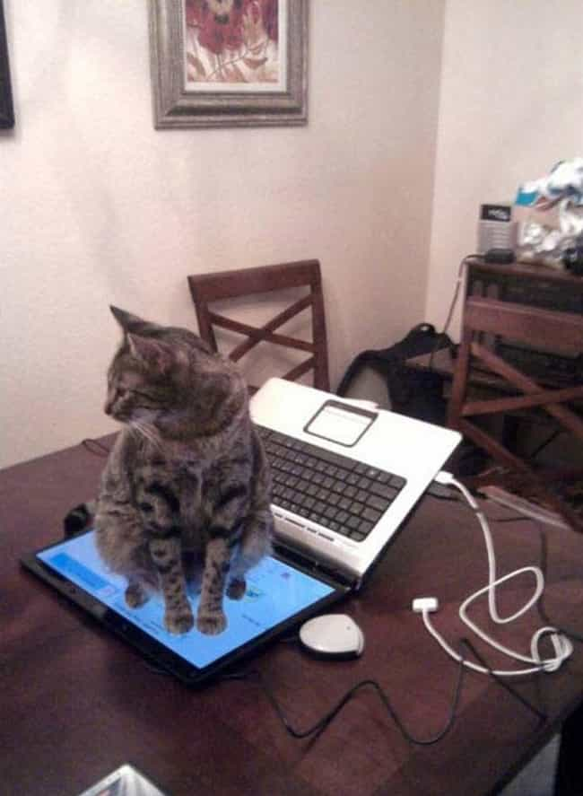 Computer Screening Process is listed (or ranked) 3 on the list 20 Photos That Prove Cats Are Pure Evil
