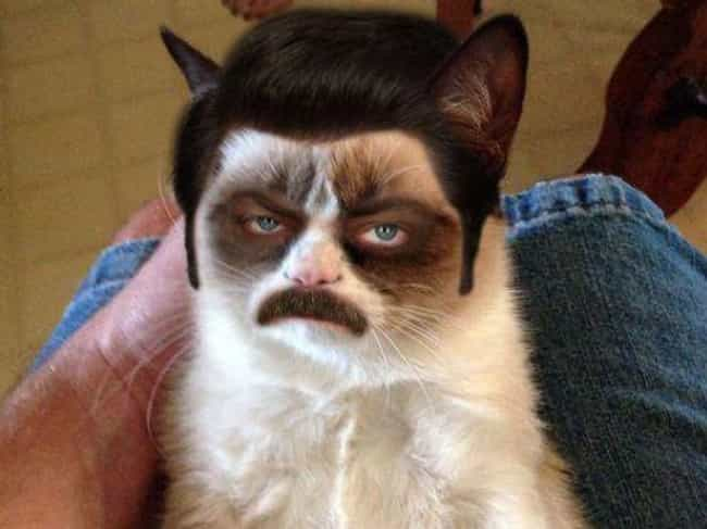 Grumpy Ron Swanson Cat is listed (or ranked) 4 on the list 37 Times Photoshop Totally Nailed It