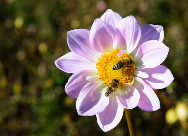 You Might Break Out in Hives is listed (or ranked) 4 on the list What Happens to Your Body When You Die from a Bee Sting