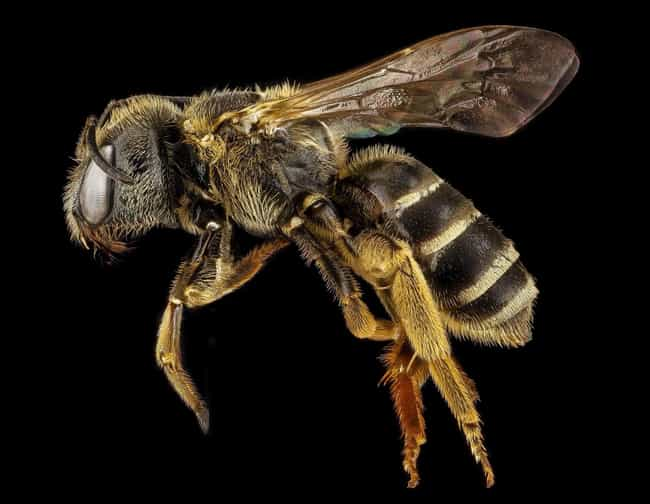 You're Going to Feel Pai... is listed (or ranked) 2 on the list What Happens to Your Body When You Die from a Bee Sting