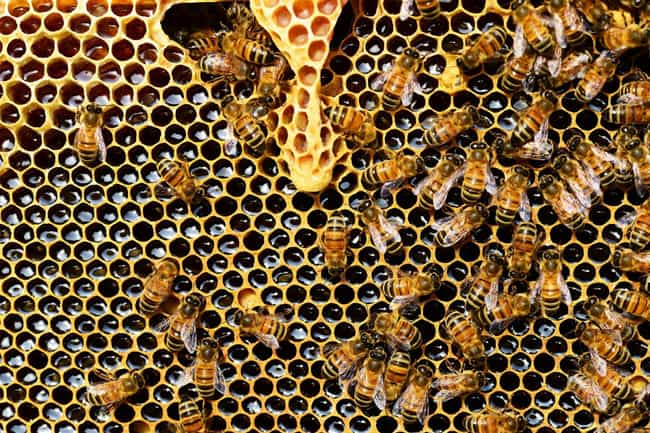 Your Face Will Start to ... is listed (or ranked) 5 on the list What Happens to Your Body When You Die from a Bee Sting