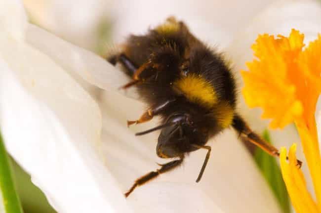 You Might Get Severe Sto... is listed (or ranked) 6 on the list What Happens to Your Body When You Die from a Bee Sting