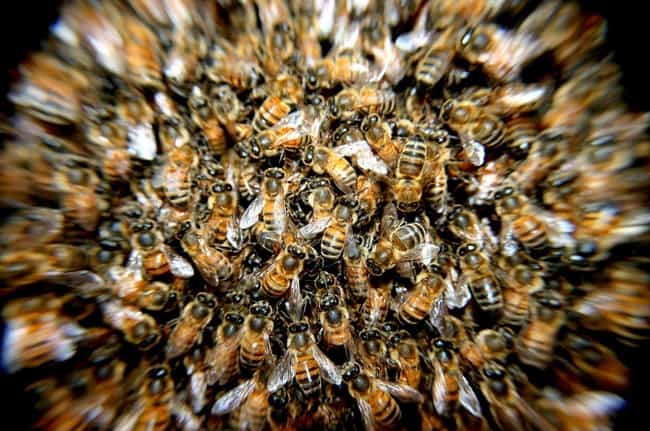You'll Feel Super Dizzy ... is listed (or ranked) 8 on the list What Happens to Your Body When You Die from a Bee Sting