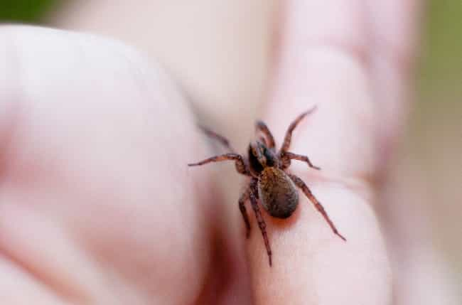 You'll Start to Hurt, And Not ... is listed (or ranked) 4 on the list 15 Horrifying Things That Happen to Your Body When You Get a Deadly Spider Bite
