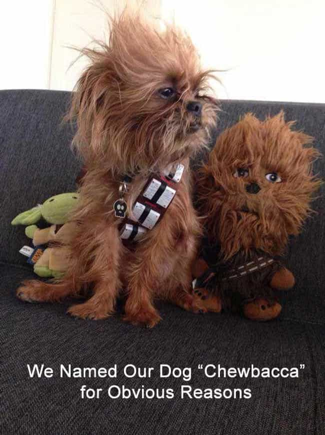 Chewbacca Dog is listed (or ranked) 1 on the list 18 Pets With Extremely Appropriate Names