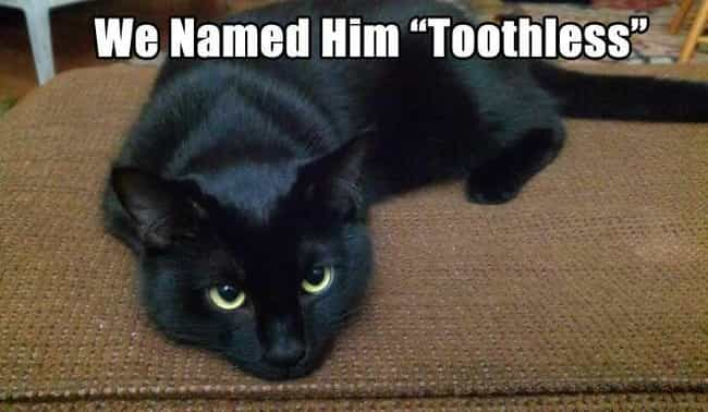 Toothless Cat is listed (or ranked) 3 on the list 18 Pets With Extremely Appropriate Names