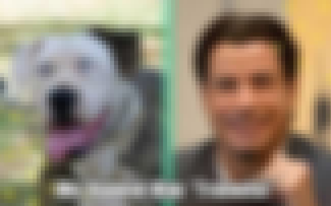 Travolta Dog is listed (or ranked) 2 on the list 18 Pets With Extremely Appropriate Names
