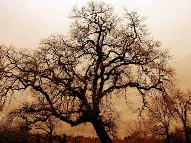 Devil's Tree Of Oak Hammoc... is listed (or ranked) 3 on the list Creepy Stories And Urban Legends From Florida