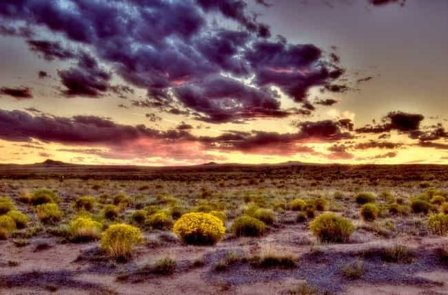 Autumn in the Mexican Desert is listed (or ranked) 3 on the list 26 Gorgeous Photos of What Fall Looks Like Around the World