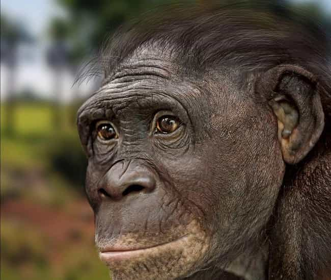 Ardipithecus kKadabba: An Acci... is listed (or ranked) 3 on the list In Memoriam: All Members of the Human Family Tree That Were Bested by Evolution