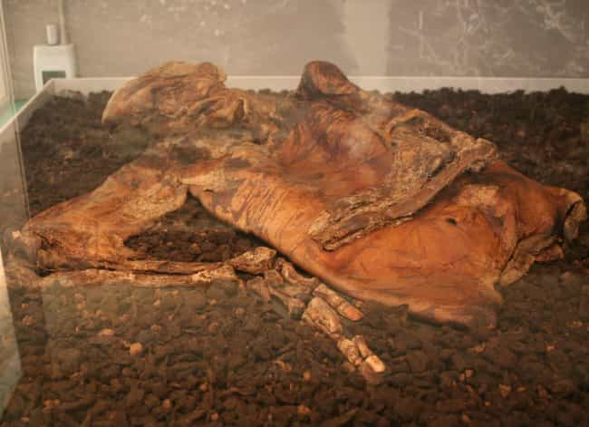 Many Bog Bodies Are Boneless is listed (or ranked) 4 on the list 14 Strange and Gruesome Facts About Bog Bodies