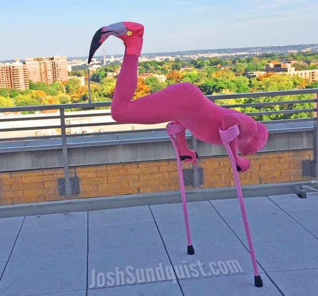 Be A Flamingo is listed (or ranked) 4 on the list These Amputees Are Turning Their Disability Into Clever And Creative Halloween Costumes