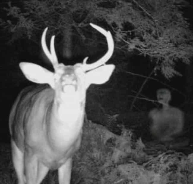 Oh Deer is listed (or ranked) 4 on the list Horrifying Real Pictures From Trail Cameras