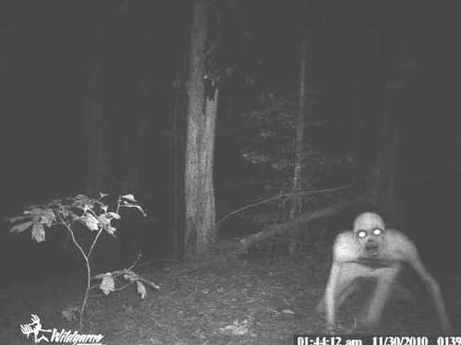 Party Ghost Likes To Par... is listed (or ranked) 1 on the list Horrifying Real Pictures From Trail Cameras