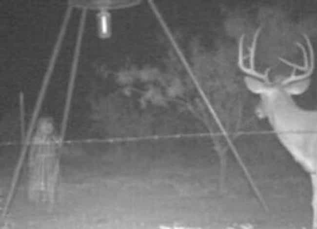 Deer For Fears is listed (or ranked) 3 on the list Horrifying Real Pictures From Trail Cameras