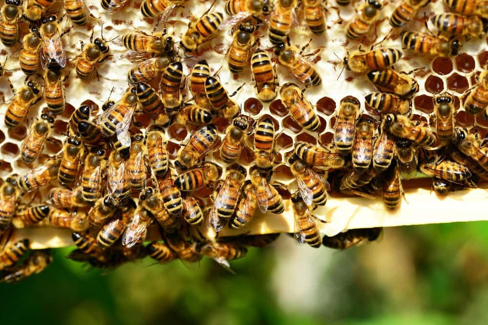Soldier Escapes Swarm of Bees  is listed (or ranked) 1 on the list 13 People Who Escaped Death Then Died Immediately After