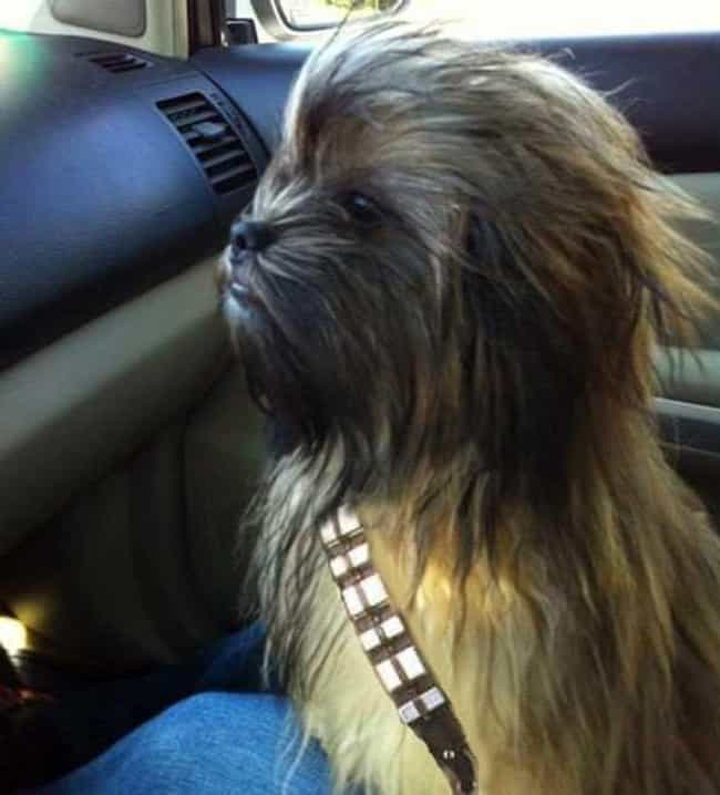 Chewbacca: The Early Years is listed (or ranked) 2 on the list 23 Instantly Recognizable Movie Characters Spotted in Real Life