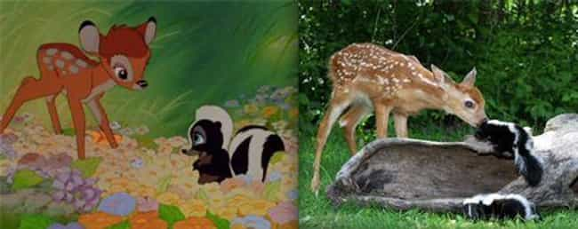 Bambi and Flower is listed (or ranked) 3 on the list 23 Instantly Recognizable Movie Characters Spotted in Real Life