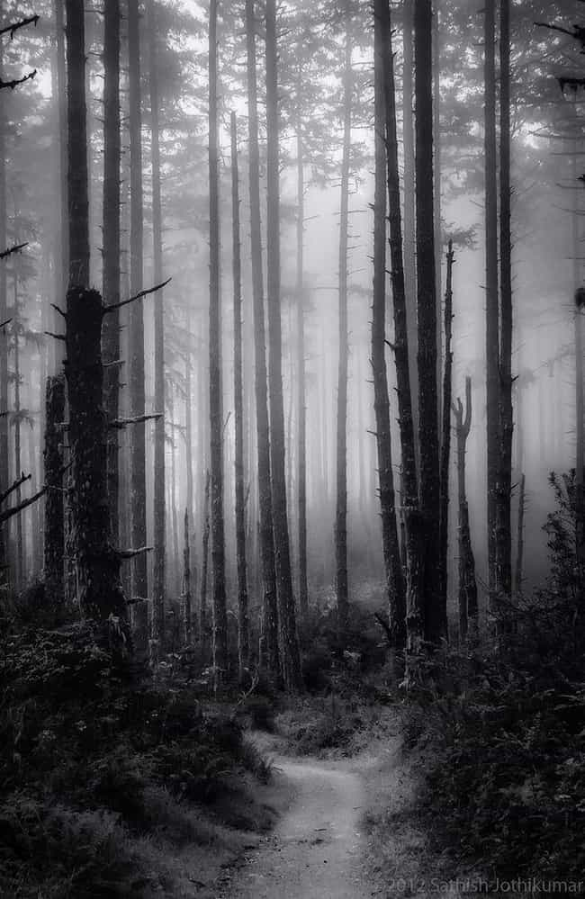 The Black Forest Haunting is listed (or ranked) 1 on the list 10 Chilling Stories And Urban Legends That Prove Colorado Is The Creepiest State