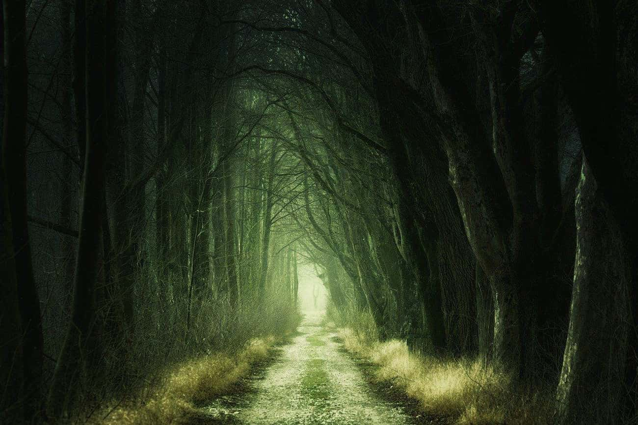 The Black Forest Haunting