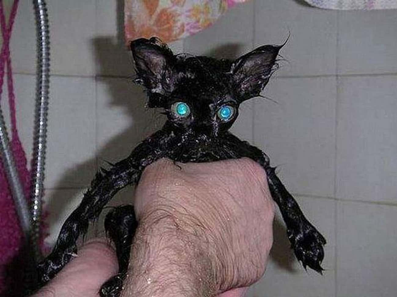 Loooook Into My Eyeeeees is listed (or ranked) 1 on the list 19 Cute Animals That Look Scary When They're Soaking Wet