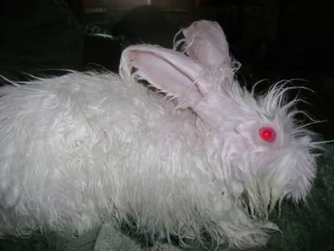 Monty Python Rabbit Threatens ... is listed (or ranked) 1 on the list 22 Cute Animals That Look Scary When They're Soaking Wet