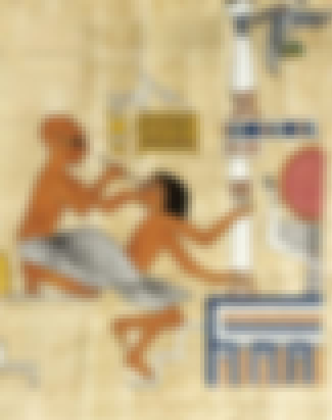 They Had Dentists And Gynecolo... is listed (or ranked) 3 on the list 16 Strange Facts About What Everyday Life Was Like In Ancient Egypt