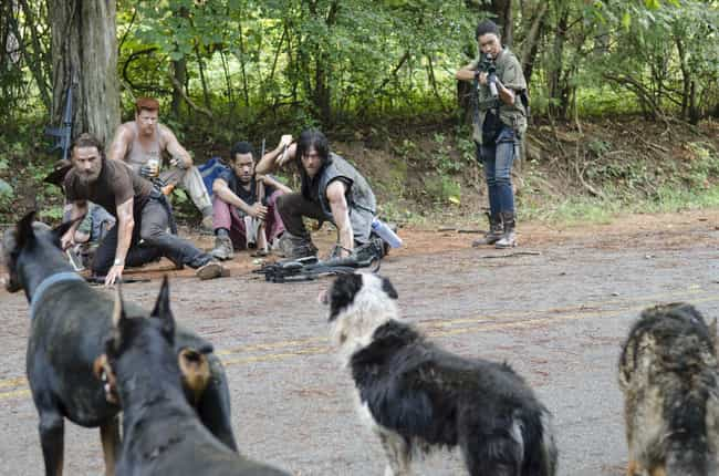 Wild Dogs is listed (or ranked) 8 on the list The 14 Most Digusting Things Survivors Have Eaten on The Walking Dead