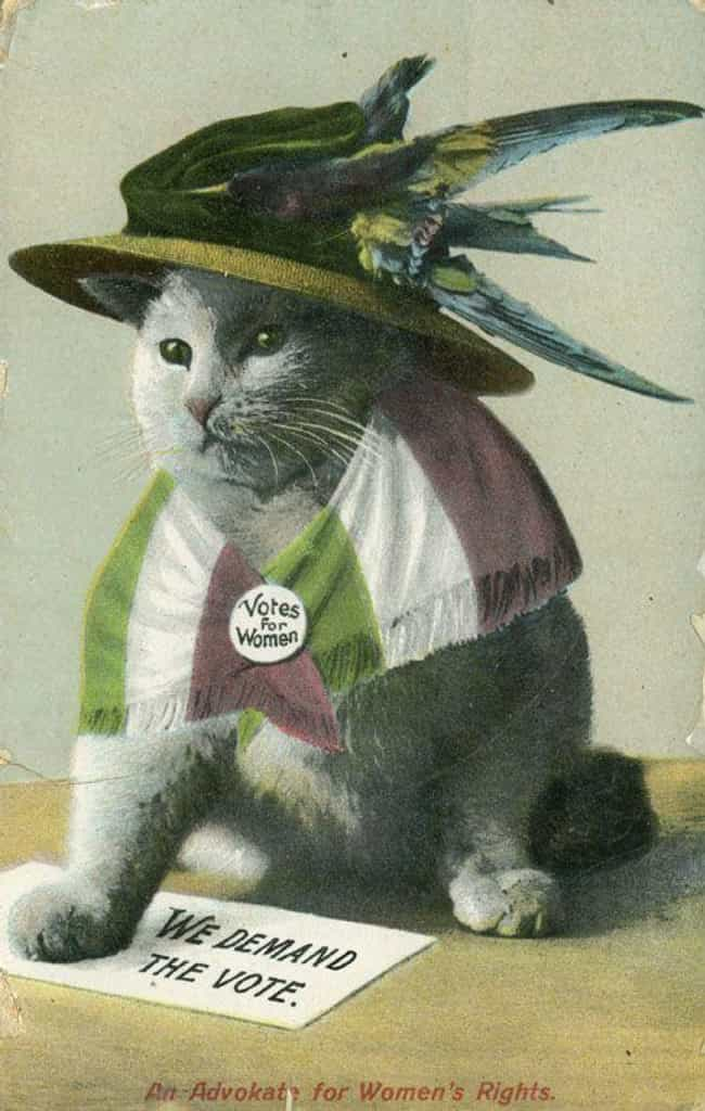 """An Advokate for Women'... is listed (or ranked) 3 on the list 31 Women's Suffrage Postcards That Show How Far We've Come"