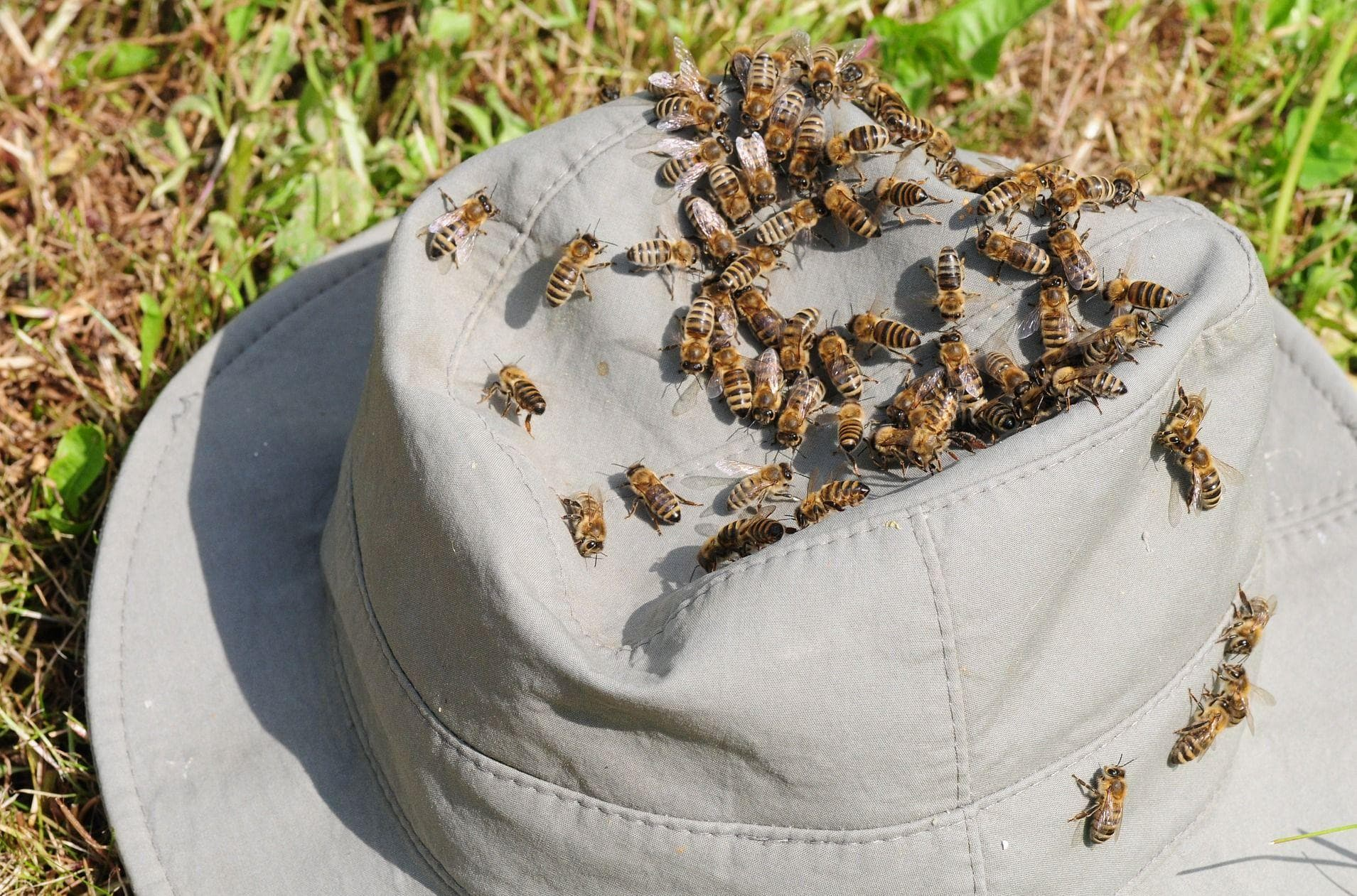Random Things You Should Know About Being Attacked by a Swarm of Bees