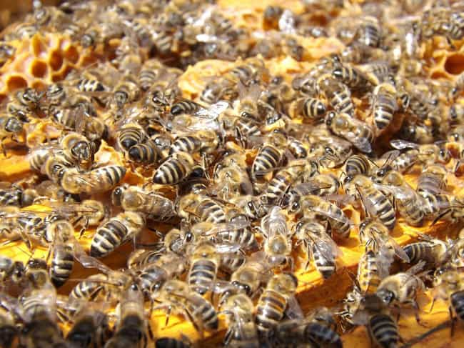 You Don't Actually Have to Be ... is listed (or ranked) 3 on the list 14 Things You Should Know About Being Attacked by a Swarm of Bees