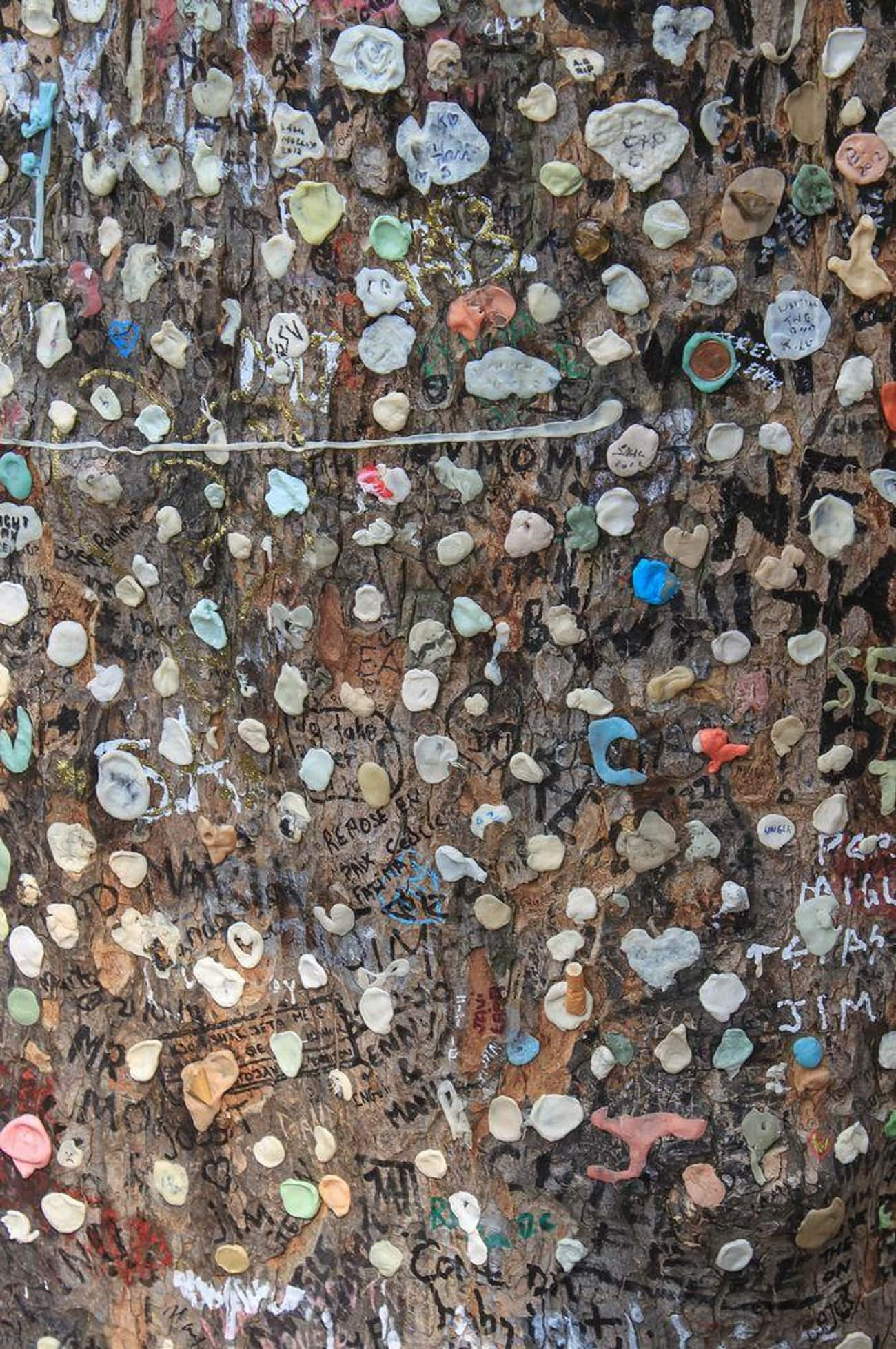 The Jim Morrison Gum Tree is listed (or ranked) 3 on the list Primally Disgusting And Bizarre Monuments From Around The World