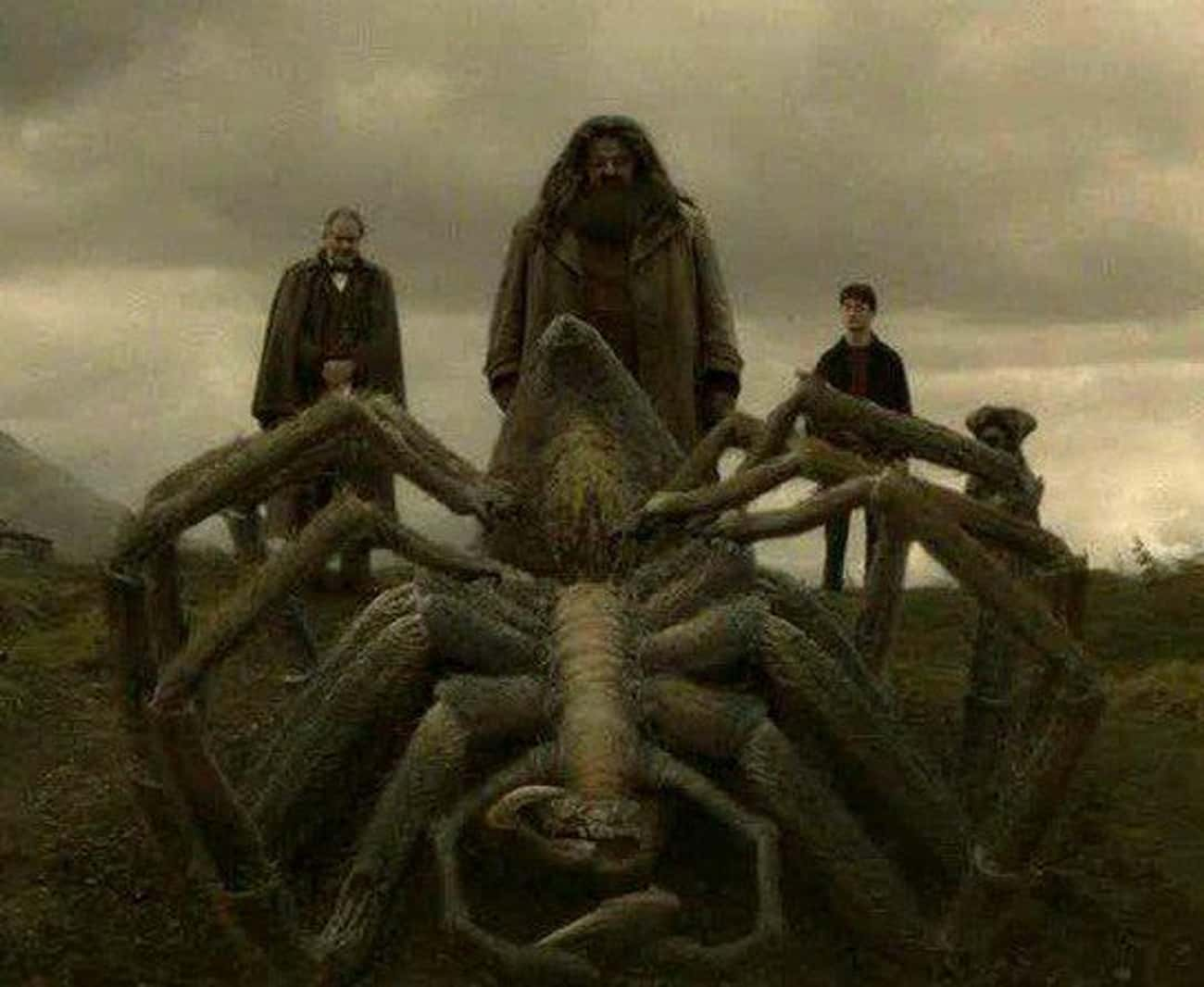 Did Hagrid Get Aragog From New is listed (or ranked) 2 on the list The Craziest Harry Potter Fan Theories That Could Be True