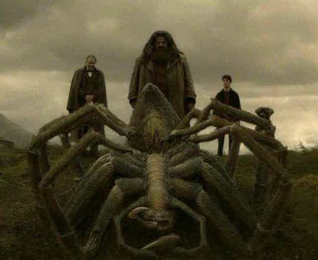 Did Hagrid Get Aragog From New... is listed (or ranked) 2 on the list The Craziest Harry Potter Fan Theories That Could Be True