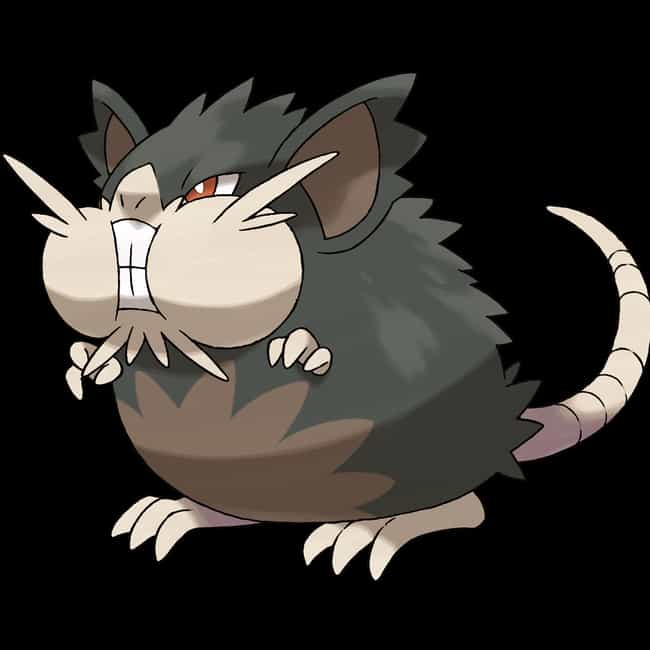 Alola Raticate is listed (or ranked) 4 on the list The 15 Dumbest New Pokemon in Sun and Moon