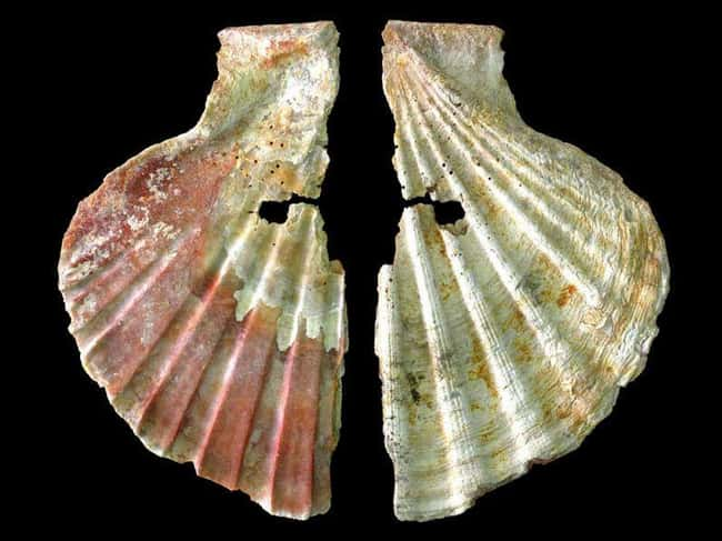 Painted Shells Demonstrate 'Pr is listed (or ranked) 6 on the list 15 Bizarre Archaeological Finds That Rewrote History As We Know It