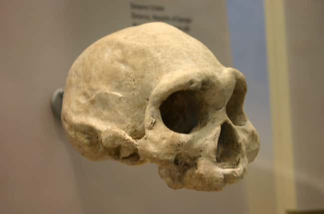 A 2 Million-Year-Old Skull Cha is listed (or ranked) 8 on the list 15 Bizarre Archaeological Finds That Rewrote History As We Know It