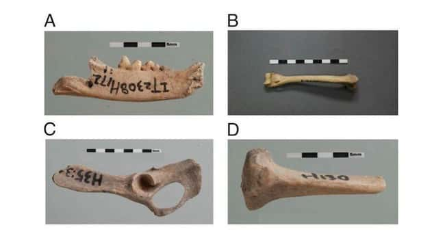 Cat Remains Helped Show How Th is listed (or ranked) 11 on the list 15 Bizarre Archaeological Finds That Rewrote History As We Know It