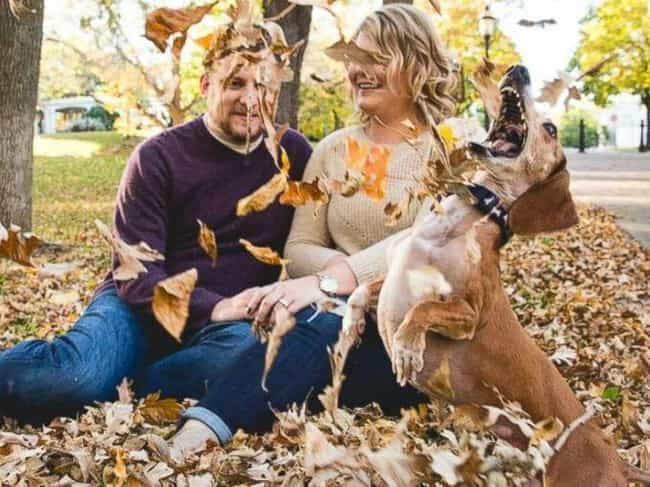 Leaf Me Alone! is listed (or ranked) 4 on the list 27 Hilarious Times Pets Ruined Family Photos