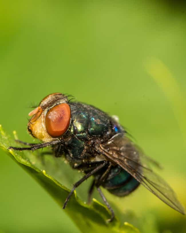 Blow Flies Flock To Fres... is listed (or ranked) 4 on the list 14 Beyond Fascinating Things We've Learned From Body Farms