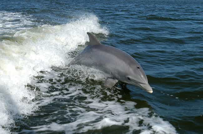 Dolphins Sometimes Try T... is listed (or ranked) 3 on the list 11 Weird Sex Facts That Prove Dolphins Are DTF