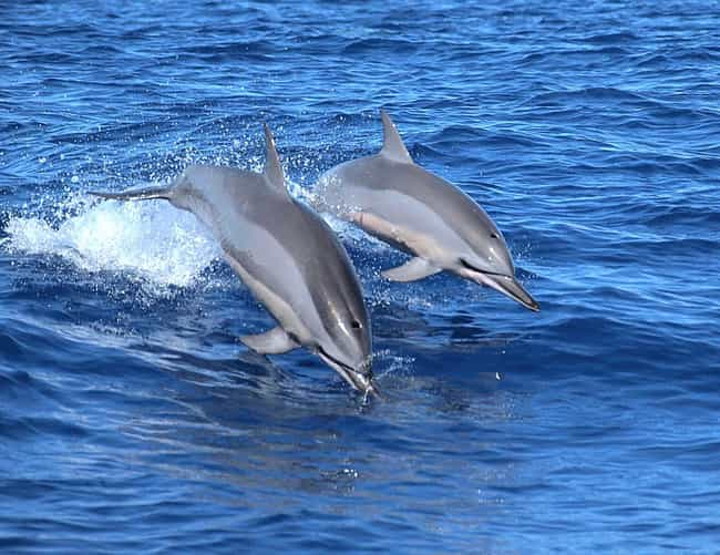 They Occasionally Practi... is listed (or ranked) 4 on the list 11 Weird Sex Facts That Prove Dolphins Are DTF
